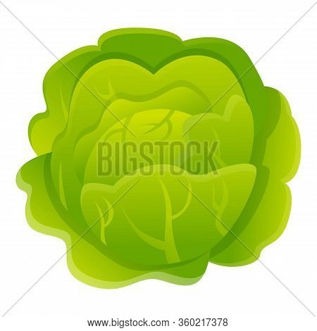 Vegetable Cabbage Icon. Cartoon Of Vegetable Cabbage Vector Icon For Web Design Isolated On White Ba