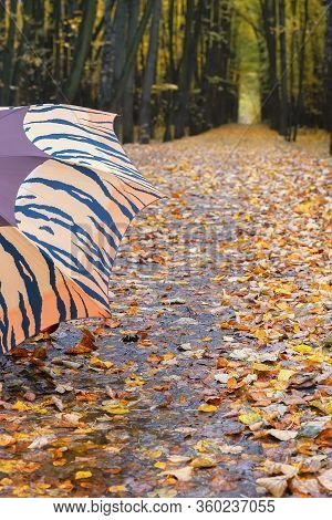 Forest Path With Many Fallen Leaves, Autumn Landscape And Visible Part Of The Umbrella. Fall In The