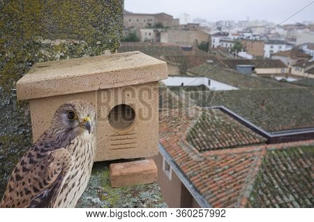 Nest Boxe At Monumental Building Roof In Caceres, Spain. These Shelter Are Placed In Order To Improv