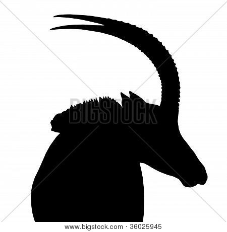 Sable Bull Portrait Side View Isolated Silhouette