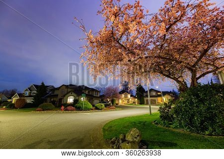 Beautiful View Of Cherry Blossom And Homes In Residential Neighborhood During A Vibrant Spring Night