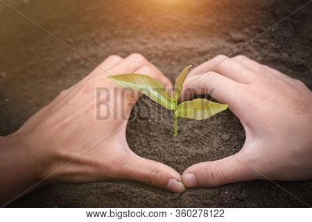 Conserve The Environment By Planting Trees. Protect Hands By Growing Plants Financial Concepts, Envi