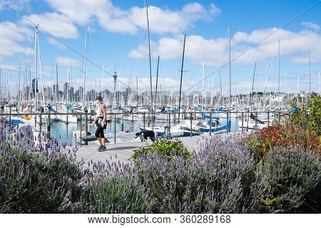 Auckland, New Zealand, Nz - September 16, 2020: Woman Walking Dog Along Westhaven Marina Promenade