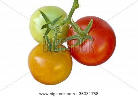 Tomato Ripe And Unripe Fruits