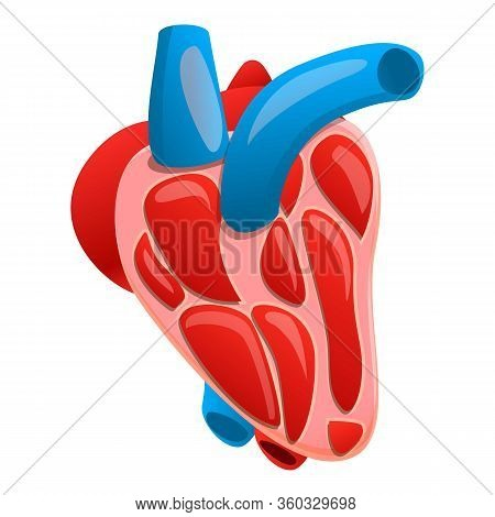 Section Human Heart Icon. Cartoon Of Section Human Heart Vector Icon For Web Design Isolated On Whit
