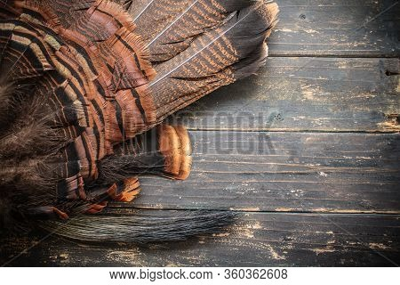 Eastern Wild Turkey Feathers And Beard