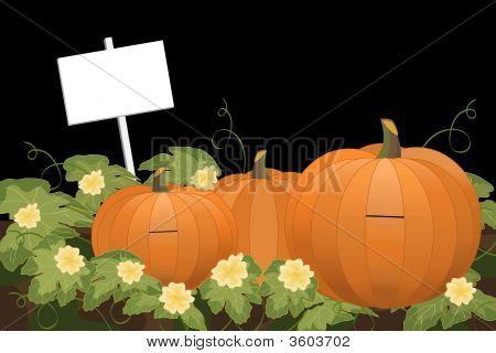 Pumpkin Patch At Night With Sign