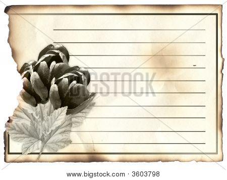 Blank Post Card For Condolence