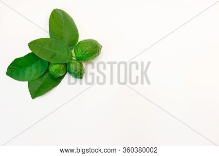 Lemon Tree Twig With Leaves And Three Ripe Small Lemon Fruits On A White Background, With Copy-space