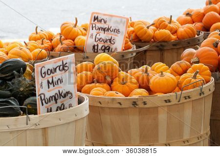 Mini pumpkins in rows of baskets at an outdoor market