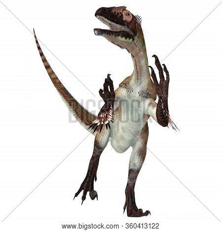 Utahraptor Dinosaur Over White 3d Illustration - Utahraptor Was A Carnivorous Theropod Dinosaur That