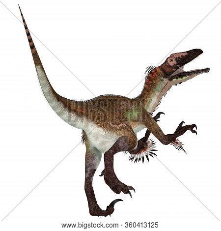 Utahraptor Dinosaur Tail 3d Illustration - Utahraptor Was A Carnivorous Theropod Dinosaur That Lived