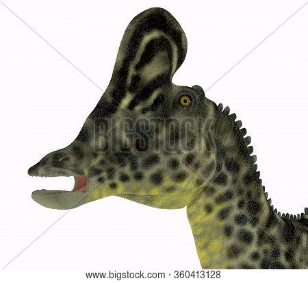 Velafrons Dinosaur Head 3d Illustration - Velafrons Was A Herbivorous Hadrosaur Dinosaur That Lived