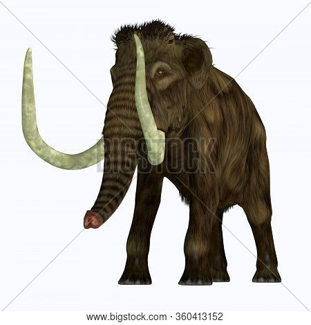 Woolly Mammoth Tusker 3d Illustration - The Woolly Mammoth Was A Herbivorous Elephant That Lived In