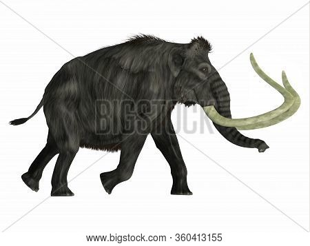 Woolly Mammoth Walking 3d Illustration - The Woolly Mammoth Was A Herbivorous Elephant That Lived In