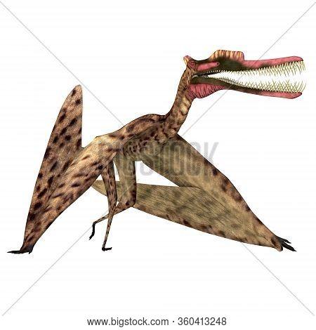Zhenyuanopterus Pterosaur Walking 3d Illustration - Zhenyuanopterus Was A Carnivorous Pterosaur Rept