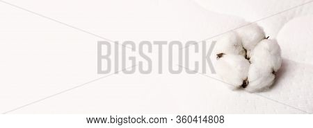 Cotton Flowers On A Comfortable Mattress Texture Background Top View. White Texture Of Mattress Bedd