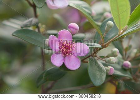 12 May 2008 The Nature Background Of Flower At Hong Kong