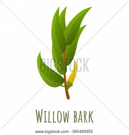 Willow Bark Branch Icon. Cartoon Of Willow Bark Branch Vector Icon For Web Design Isolated On White