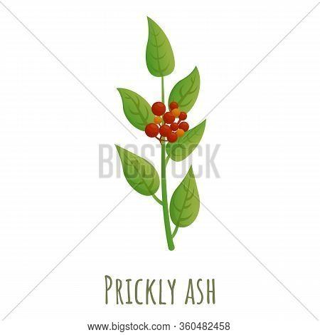 Prickly Ash Icon. Cartoon Of Prickly Ash Vector Icon For Web Design Isolated On White Background