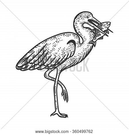 Heron Holds Fish In Its Beak Sketch Engraving Vector Illustration. T-shirt Apparel Print Design. Scr