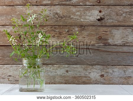Meadow Natural Wildflowers Bouquet In Glass Jars On Wooden Rustic Background. Herbal Medicine And Ph