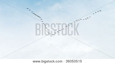 Geese flying in formation in summer