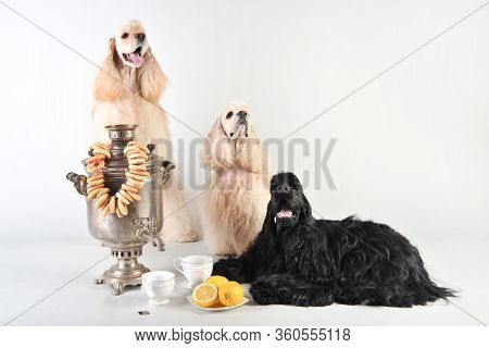 Funny Cocker Spaniels With Russian Samovar, Bagels And Tea In The Studio On A White Background, Cock