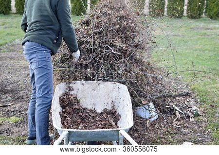Man Trowing Dry Leaves And Branches From Old Metal Wheelbarrow On Big Heap Outdoors In Backyard On G