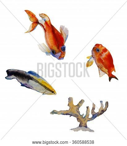 Set Fo Watercolor Tropic Fishes And Coral Isolated On White Background. Bluestreak Cleaner Wrasse As