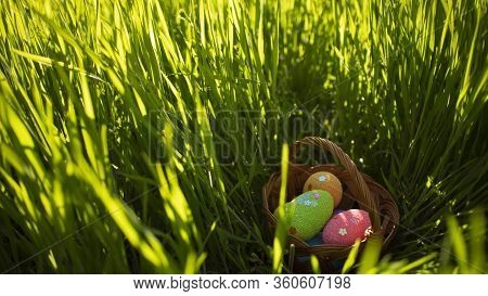 Colorful Easter Eggs In Basket Hiding In The Green Grass. Happy Easter. Easter Egg Hunt. Springtime
