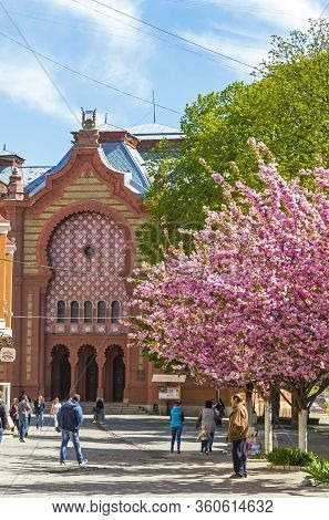 Uzhhorod, Ukraine - April 16, 2019: Blossoming Pink Cherry Trees (sakura) On Teatralna Square In Uzh