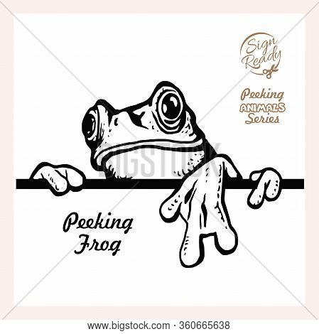 Peeking Frog - Funny Frog Peeking Out - Face Head Isolated On White