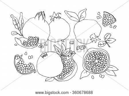 A Set Of Contour Vector Illustrations With Whole Pomegranates, Pieces Of Pomegranates And Leaves.