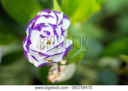 The Background Image Of The Colorful Flowers