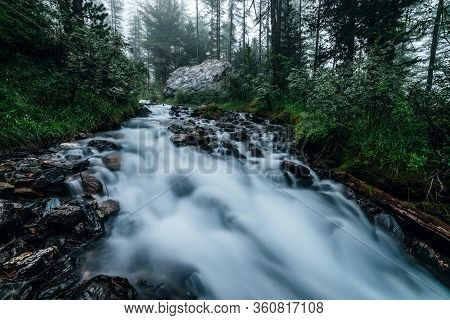 Fast Mountain Creek Flows In Dark Forest. Cascade Stream In Backwoods Among Dense Thickets And Conif