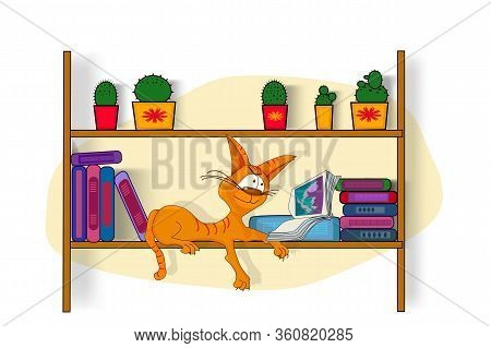 World Book Day. Different Color Books With Ornament On Shelf With Cat On Bookshelf. Tabby Red Cat Ly