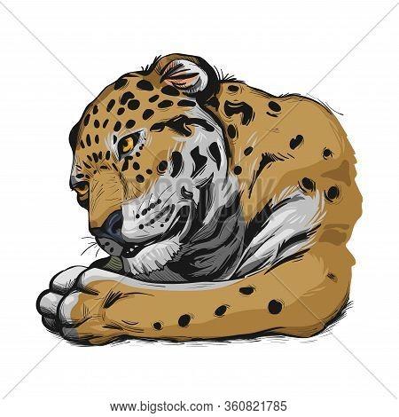 Jaguar Portrait Closeup Of Animal. Panthera Once Type Of Carnivore Fauna. Wildlife Of South America,