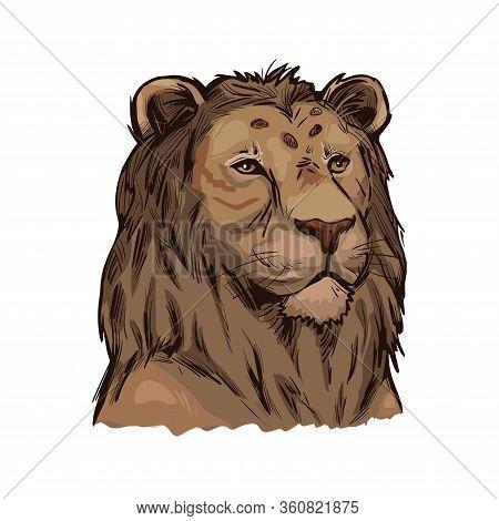 Tigon Animal Muzzle Portrait In Closeup. Animalistic Drawing Of Tigon, Hybrid Mammal. Wild Car Of Fe