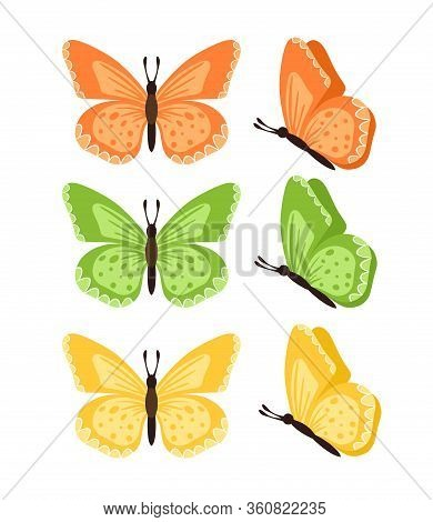 Butterflies Isolated On White Background. Colored Butterflies. Pretty Vector Butterfly Set With Spri