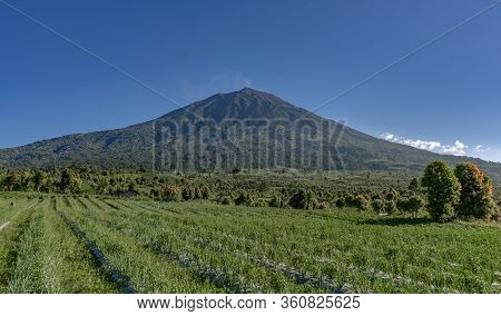 Pyramid Shaped Kerinci Volcano Seen From Gardens Nearby On A Clear Blue Sky Day In Kersik Tua, Jambi