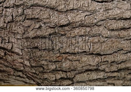 A Brown Apple Tree Bark Is A Close-up Shot. Natural Relief And Texture As A Background For Text. Sym