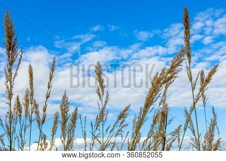 Tufts Of Brown Grass In The Foreground With The Sky And Clouds In The Background
