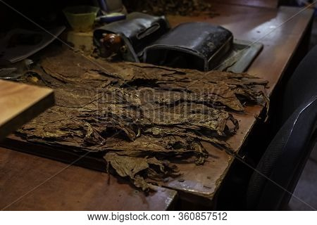 Dry Tobacco Leaf On The Table Near The Machine For Cigar Rolling. Workplace In Cigar Shop.