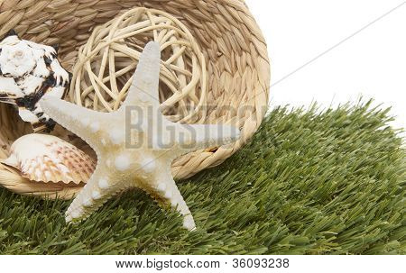 Seashells In Basket On Grass