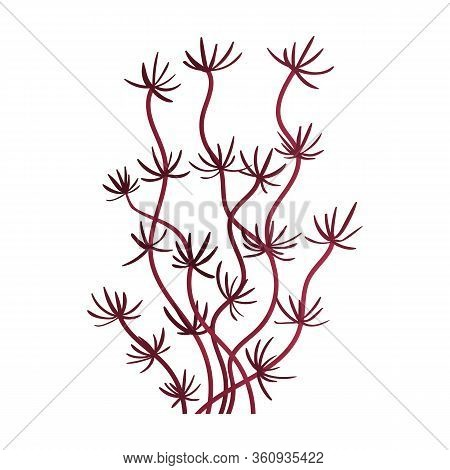 Seaweed Vector Icon.cartoon Vector Icon Isolated On White Background Seaweed.