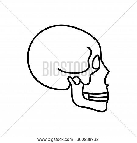 Human Skull Anatomy. Flat Vector Medical Illustration Isolated. Structure Of Facial Skeleton Profile
