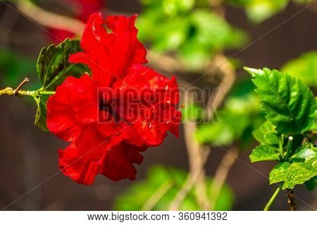 Flowers Stock Photos In Natural Condition With It Leaves, Branches And Other Natural Surroundings