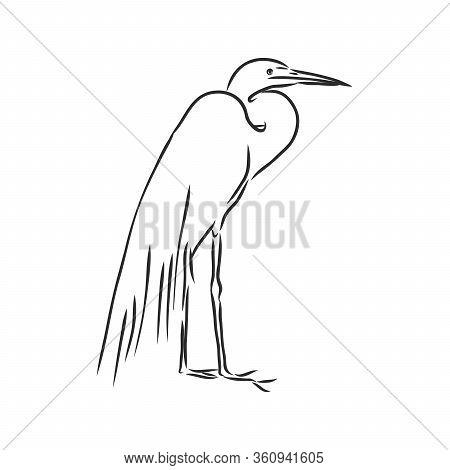 Beautiful Heron, Wild Wading Bird, Vector Sketch Illustration