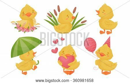 Yellow Chicken Sitting In Reeds And Walking With Umbrella Vector Set